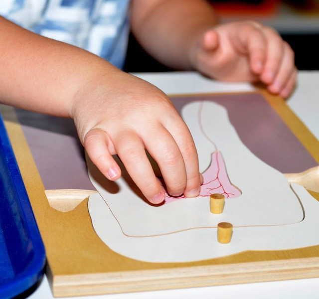 Montessori School Summer Program Human Anatomy